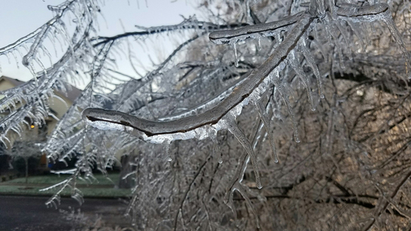Icy Tree in Inclement Weather